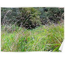 grassy marsh Poster