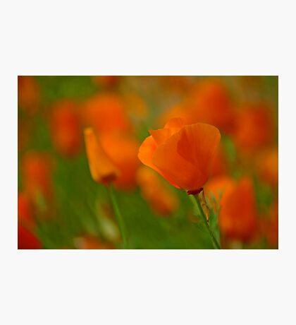 Poppy Art Photographic Print