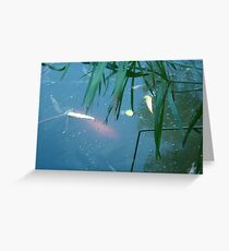 Exotic Fish Playing with Bubbles. Greeting Card