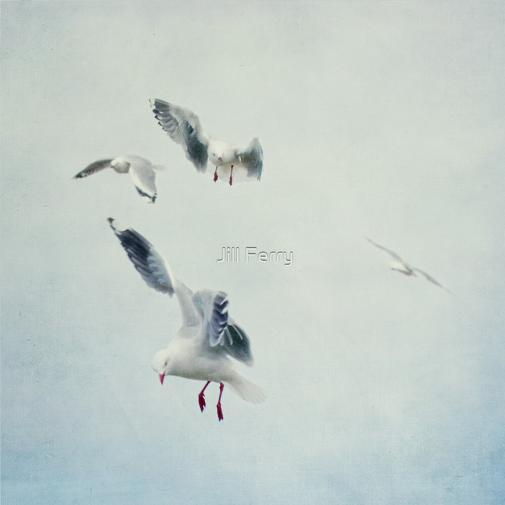 Gulls by Jill Ferry