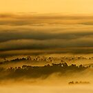 Morning Fog by Steven  Siow