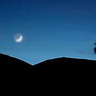 Moon / Venus on the left, palm tree on the right. by waddleudo