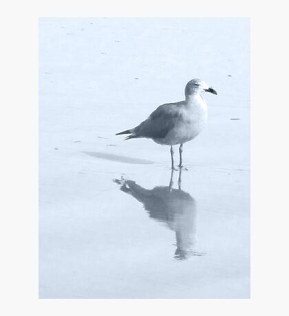 Gull and Reflections, Blue Tint Photographic Print