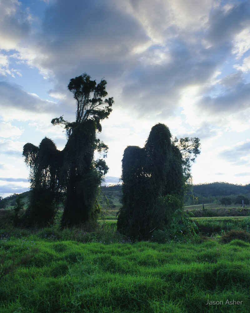 """""""Some Shifty Cloaked Figures..."""" ∞ Dundas, QLD - Australia by Jason Asher"""