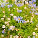 Tiny flowers by George Limitsios