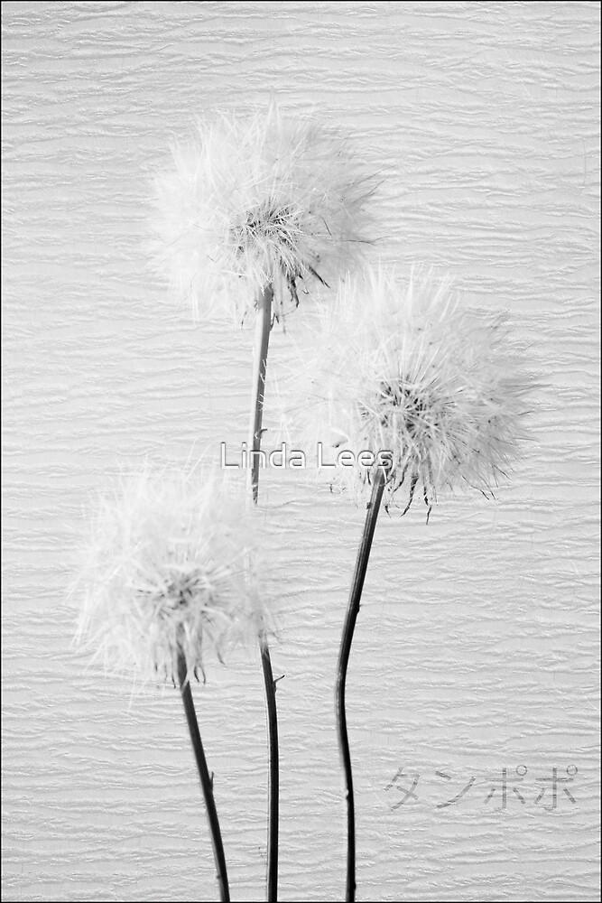 Dandelion in black & white by Linda Lees