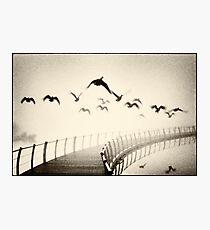 Wild geese Photographic Print