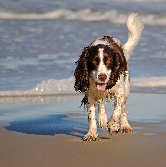 Beach Pup by Robin Black