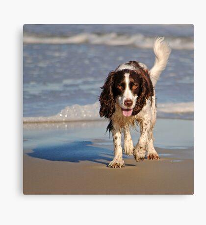 Beach Pup Canvas Print
