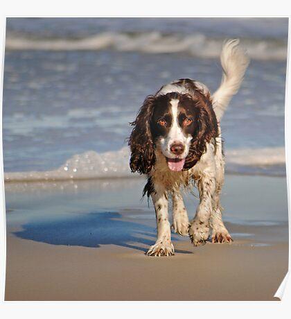Beach Pup Poster