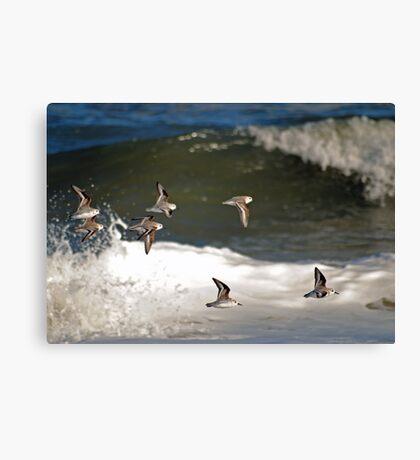 Wave Sailing Canvas Print