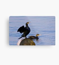 Cormorants Metal Print