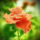 Vintage Rose Flowers by Nhan Ngo