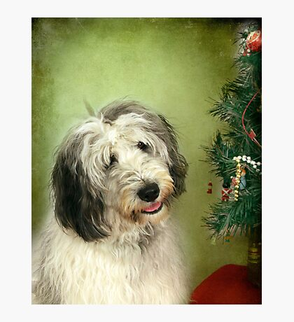 """ I Hope There Really Is A Santa Paws . . ."" Photographic Print"