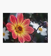 Flower with a bud Photographic Print