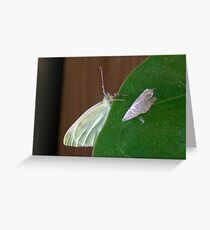 Post-pupation Greeting Card