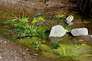 Cool Water Green by Vicki Pelham