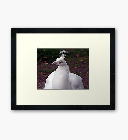 Well,Hello There.. Framed Print