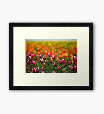 Layers Of Tulips Framed Print