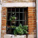 Window, Venice by Barbara Wyeth