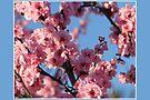 Blossom Me Tree Long by Emma Holmes
