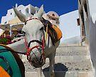 Donkey Train White by Emma Holmes