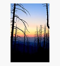 Snaggle Tooth Forest Photographic Print