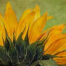 Sunflower by Julesrules