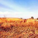 Field Of Gold - From The 'King Midas Series' by Katayoonphotos
