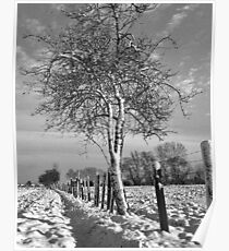 Hawthorn and fence in Winter Poster