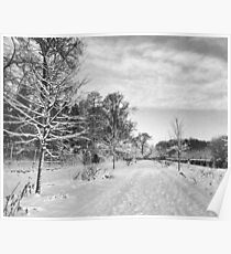 Young Beech Avenue in Winter Poster