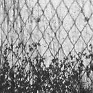 Weeds on a fence by Richard G Witham