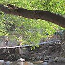 Suspension bridge - Puente Colgante/Rio Cuale, Puerto Vallarta, Mexico by PtoVallartaMex