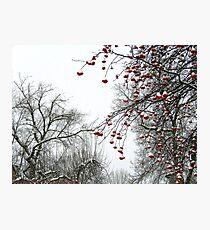 Winter Berries Photographic Print