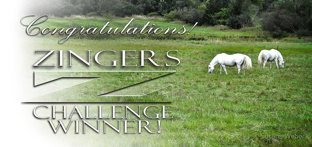 Zingers Challenge Winners Banner Entry by Susana Weber