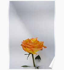 Rose in Snow Poster
