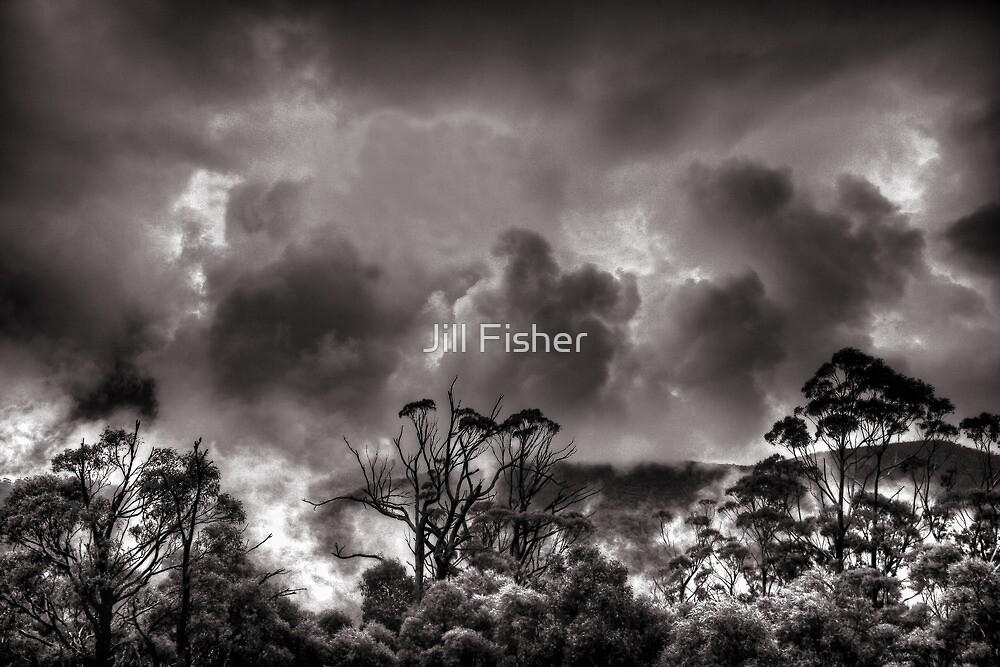 Treetops in the Mist by Jill Fisher
