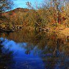 November Blues by NatureGreeting Cards ©ccwri