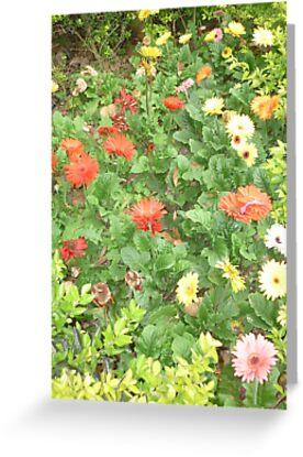 A beautiful happy flower dance by Joseph Green