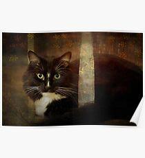 Renaissance cat Poster