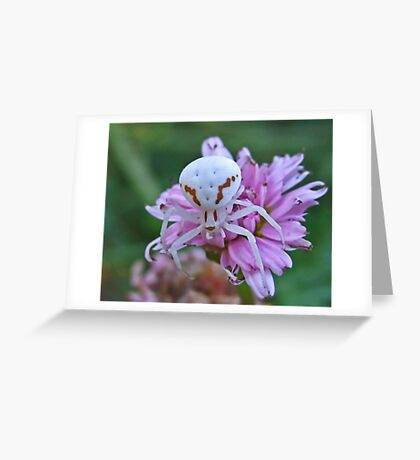 Crab-Spider Greeting Card
