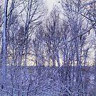 Backyard Snowy Morning by jrier