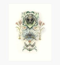 Antique pattern - Spider and Moths Art Print