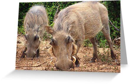 Common Warthog (Phacochoerus africanus) by Shaun Swanepoel