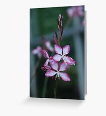 Delicate as a straw Greeting Card