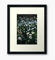 Daisies patch Framed Print