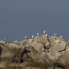 Gull Rest by Goldendays