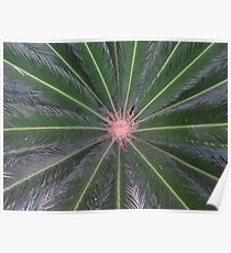 Plant - colour and composition - Planta - color y estructura Poster