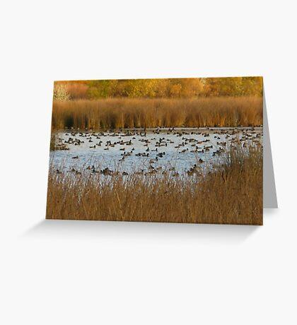 Nature's natural Beauty Greeting Card