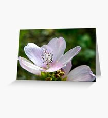 Tiny Pink Flower Greeting Card